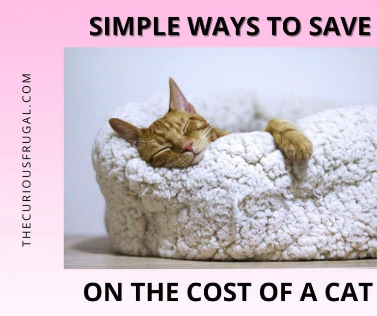 Simple Ways to Save Money on the Cost of a Cat