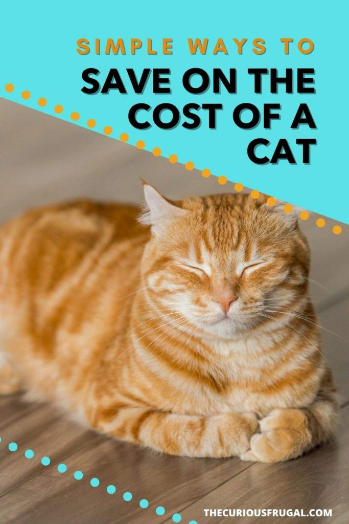 Simple ways to save on the cost of a cat (orange cat asleep on the floor)