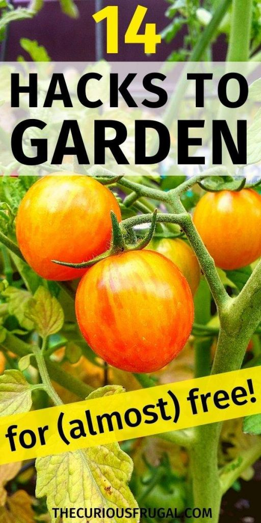 14 Hacks to garden for almost free (baby tomato plants in a garden)