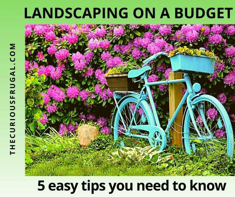 Landscaping on a Budget: 5 Easy Tips you Need to Know