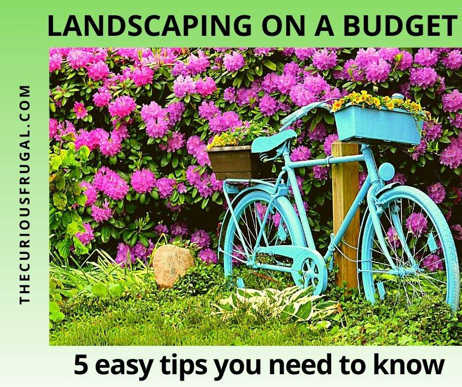 Landscaping on a budget: 5 easy tips you need to know (beautiful backyard garden with purple flowers on a bush, ornamental grasses, and decorative blue bicycle with planters)