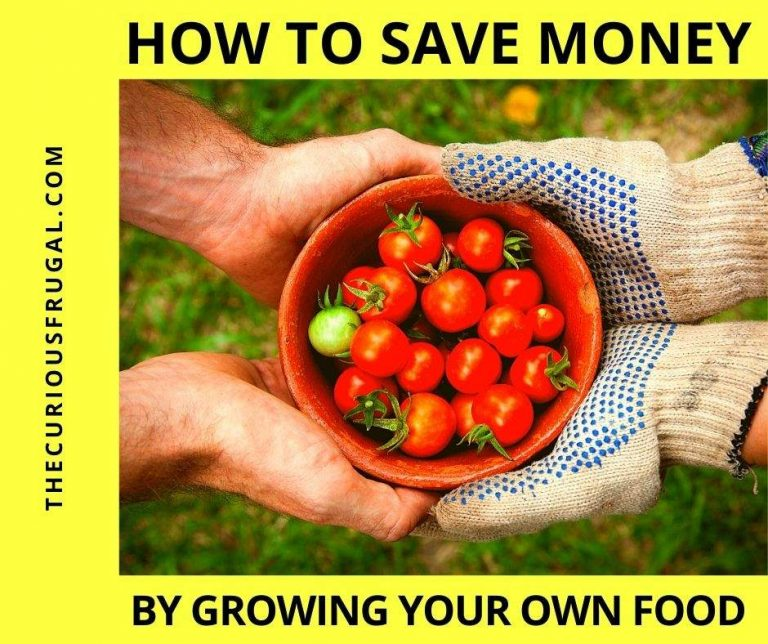 Saving Money by Growing Your Own Food + 7 Best Vegetables to Grow to Save Money