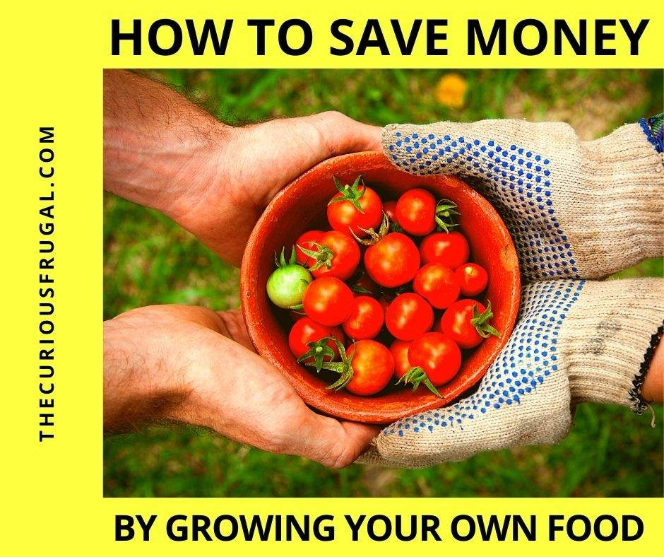 How to save money by growing your own food (bowl of ripe baby tomatoes being handed from one gardener to another in the backyard)