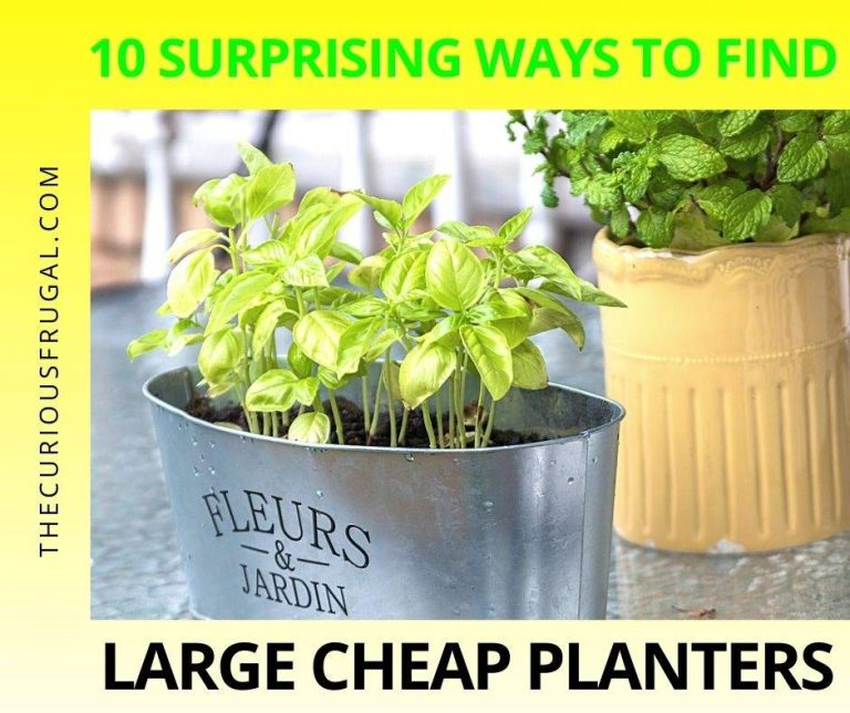 10 Surprising Ways to Find Large Cheap Planters For Your Garden and Save Money