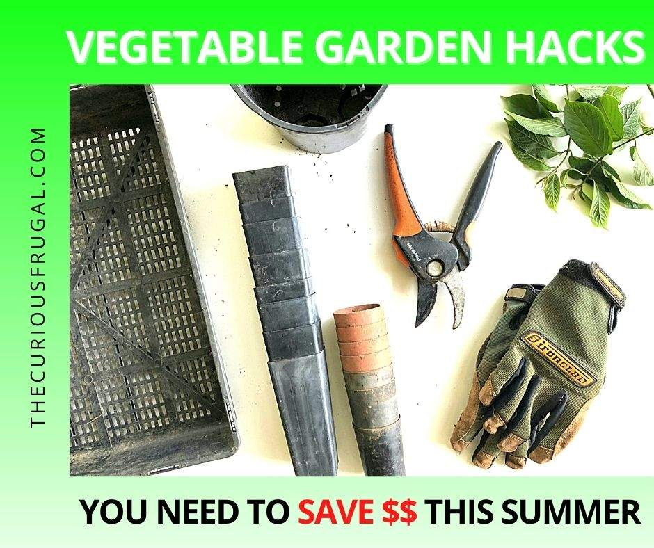 Vegetable garden hacks you need to save money this summer (gardening gloves, garden shears, flower pot, leaves on a table)